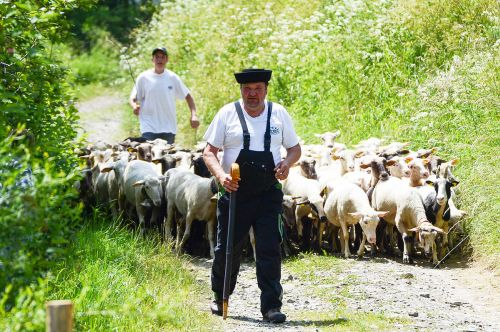 sheep farm tour, traditions in slovakia